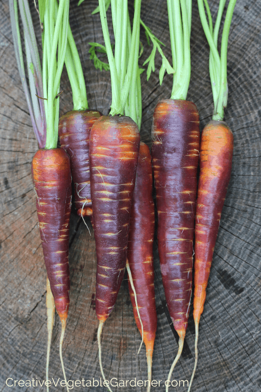 carrots to grow