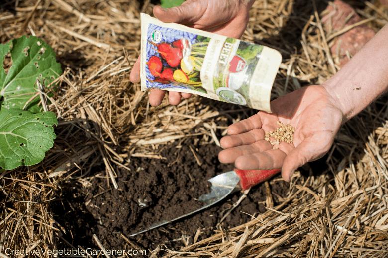 vegetables for beginning gardeners