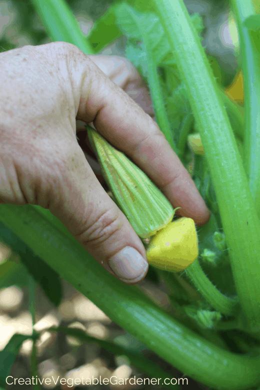 ideas for beginning gardeners