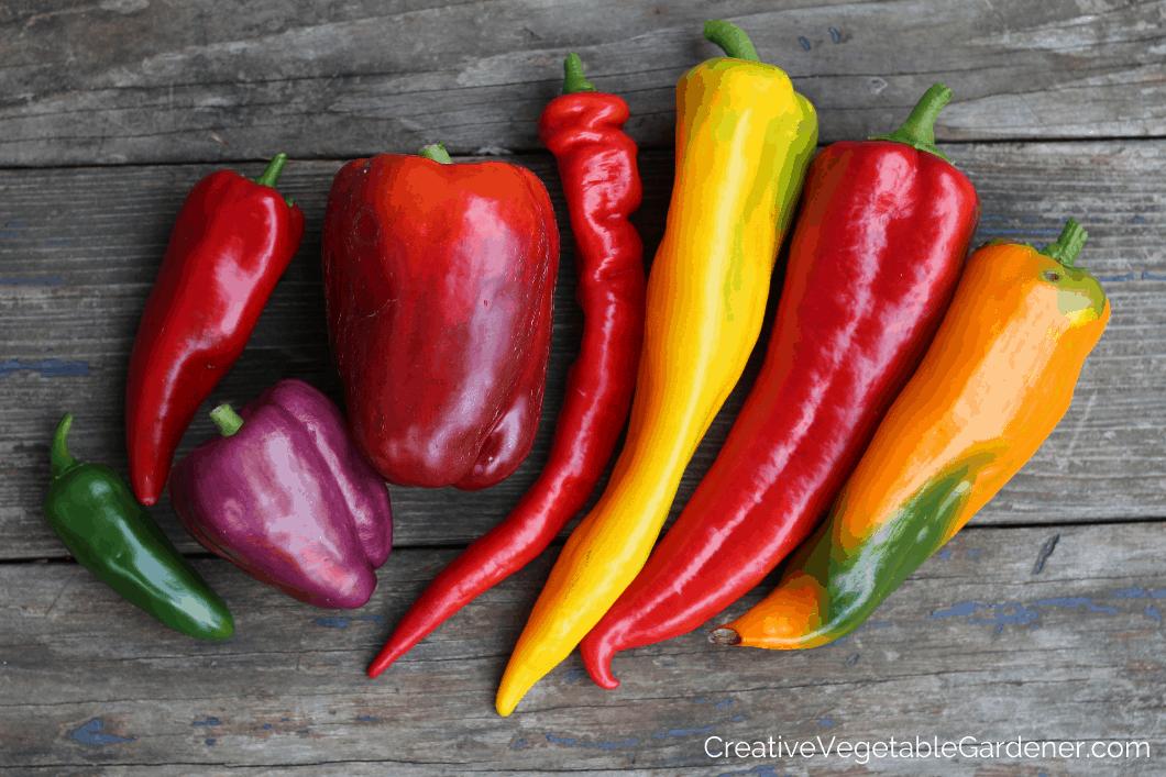 sweet pepper harvest on table