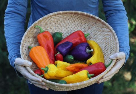 woman holding basket of sweeet peppers