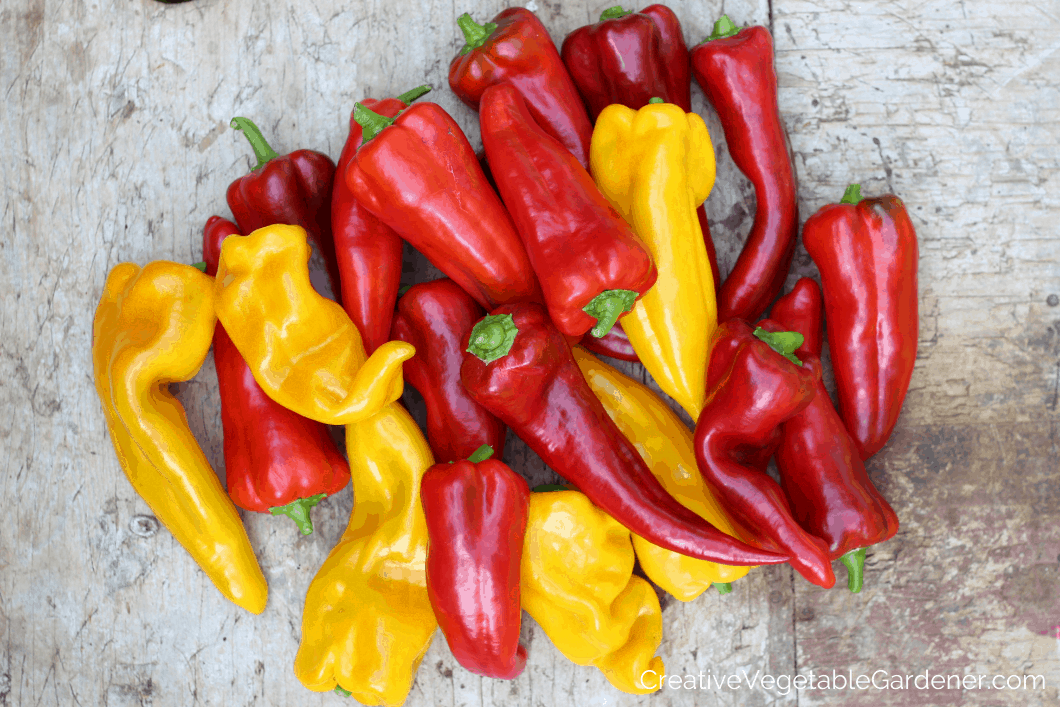 pile of red and yellow sweet peppers