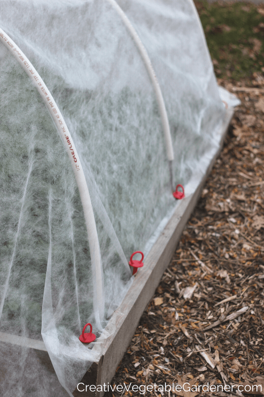 example of frost protection for plants in the garden with row cover