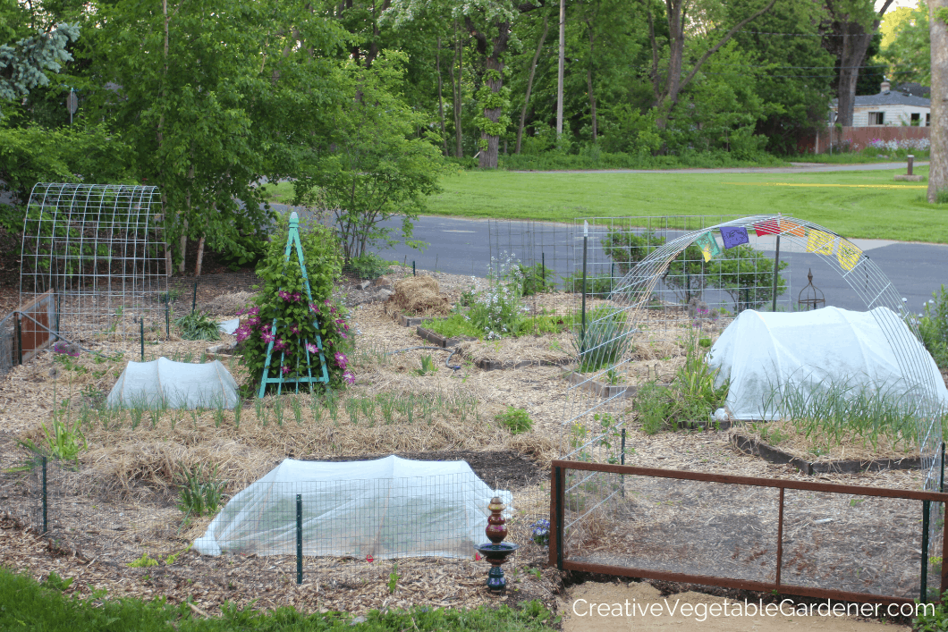 garden in spring with row covers
