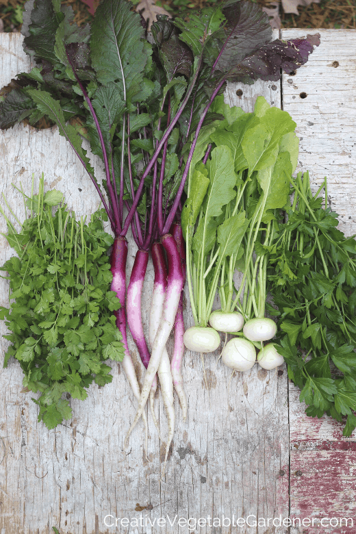 fall vegetable harvest with cilantro