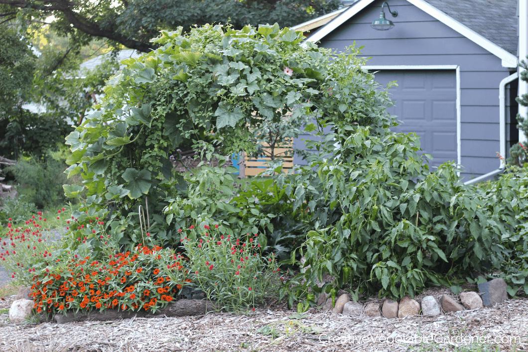 no-till vegetable garden