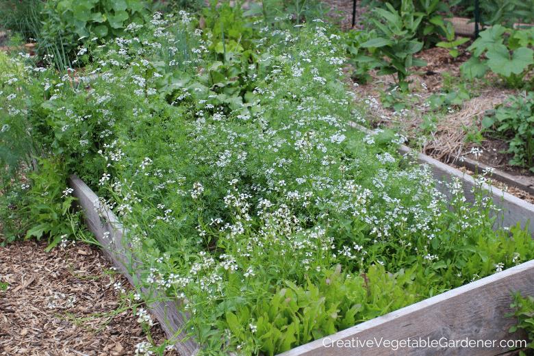 vegetable plants bolting in garden