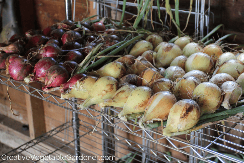 storing onions in garage