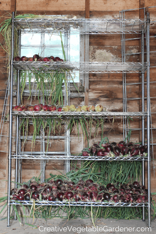 onions storing for the winter