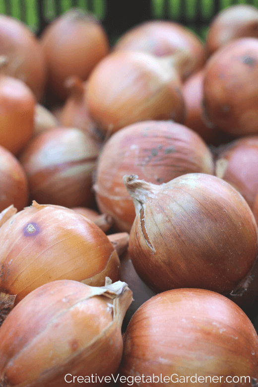 how to store garden onions