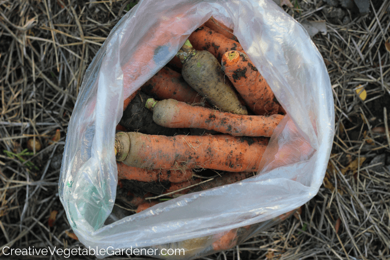 how to store carrots from the garden
